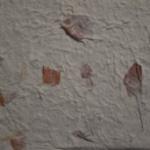 carta-petali-bouganville